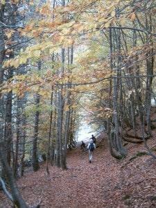 Bosques para admirar fauna y flora