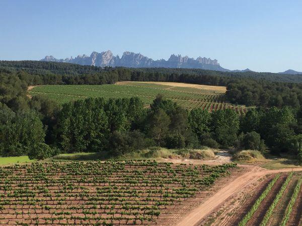 Rutas ciclistas desde Mas de la Sala:Viñas y el macizo de Monsterrat, en la comarca del Bages